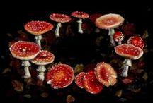 mushrooms / This year was a great mushroom year.  / by Ton van Pelt