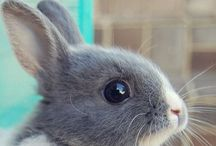 Animals and pets / Állatok