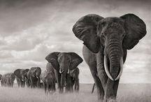 Beautiful creatures / Animal lover