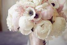 Marta's  flowers