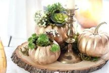 DIY Fall Decor / by Giani™ Countertop Paint