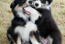 Cães, Gatos e outros / Tudo da melhor espécie, em Cachorros e Gatos. Meu cão de estimação é da raça Bolder Collie, e gosto muito.