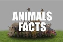 Animal Facts / A jungle of lively and wild facts, videos, and infographics about animals of all kinds, such as cats, dogs, giant pandas, and more.