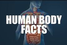 Human Body Facts / The human body is at the intersection of politics, religions, art, philosophy, and beauty, all while taking us where we need to go. Learn all about these amazing machines here.