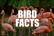 Bird Facts / Though birds are ubiquitous, their world is full of mystery and wonder. Explore the colorful and vibrant lives of our feathered friends with these wild bird facts.