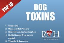 Pet Tips / Helpful pet advice, tips and facts you need to know! / by Ridgewood Veterinary Hospital