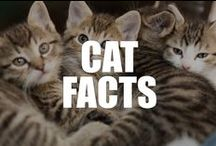 Cat Facts / Aloof, mysterious, and completely adorable, find out why cats are America's favorite pet with these interesting cat facts, video, and infographic.