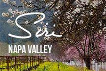 Napa Valley Dream Wedding