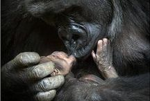 Animal Inspiration / Inspiration animale / Parce que les liens d'attachement entre les animaux et cette relation mère-enfant nous inspirent aussi...