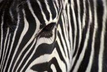 Natural & beautiful stretch marks / Jolies vergetures au naturel / Métaphores de la vergeture by Omum et pour les éviter en vrai : www.omum.fr