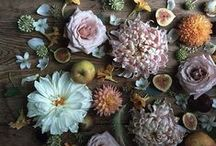 flora / flowers, flower arrangements, and more flowers