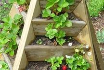 Gardening - Vegetable gardening