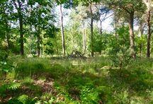 Buiten / Op pad in bos, hei of platteland.