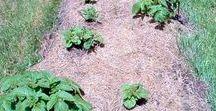 Množení a pěstování rostlin