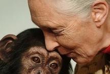 animals are people too / by karen meer