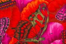 Pájaros, Mariposas etc. etc. / by Patty