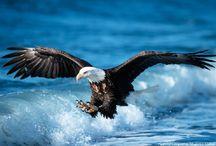 Birds of Prey / Predators of the Sky / by Gloria Taylor
