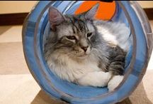 Cat tunnels / Cats in tunnels, and tunnels for cats
