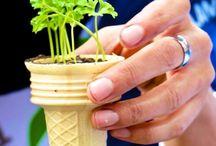 Environnement et projets d'intégration