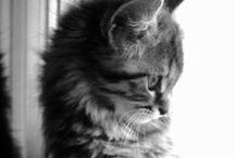Cute Cats and Other Fluffies / Cats, babies and fluffy creatures being adorable