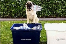 Recycling Pets!   / Our furry friends are going green too!