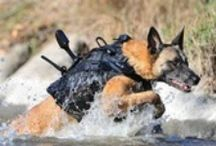 HEROES! Human & Canine / Everyday heroes: some have two legs; others have four! <3  / by Christine Eustaquio
