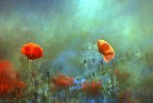 Flowers / Flowers, nature, garden