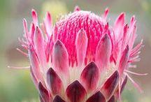Flora in Africa