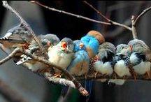 I Colori della Vita / Provo gratitudine verso la vita per tutta la bellezza che ci offre quotidianamente.