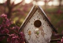 The Bird House!  / This one's for my Grandfather :) For the love of avians! / by Aniqah Maruf