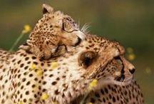 Beautiful Beasts! / by Aniqah Maruf