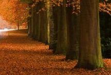 Autumn / Autumn