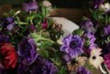 Oxford Flower Shop / Floristry in Oxford