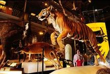 Our Favourite Museums / Here are some of our favourite museums from Scotland and around the world.