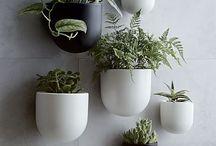 HOME DECOR & DESIGN (PLANTS)