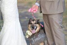 Esküvő kutyusokkal