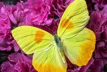 Pretty Butterflies / by Megs Firiel Orton