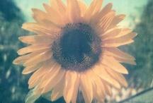 Fancy Flowers / by Megs Firiel Orton