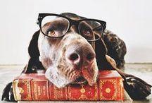 Must Love Dogs / My friends / by Megs Firiel Orton
