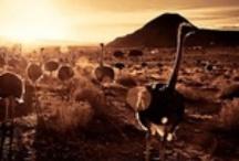 Kaalvoet Karoo Kinders**