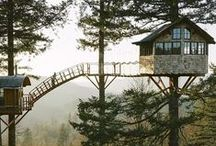 Treehouse + in the wood [for love]