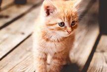 Pitits chatons et pitits nanimaux / Les petits chatons c'est trop mignon mais attention ceux-là le sont extrêmement !!