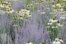 Inspiration trädgårdsrum baksida
