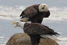 dravý ptáci