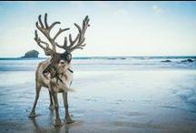 Cornish Christmas & Crafts