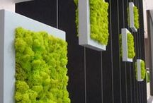 Small Garden Ideas / Wall gardens and plants for small areas.