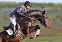 Horses: Riding & Training / Tips and ideas for English and Western riding and training.