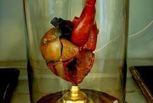 Wachs/Anatomie