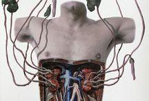 Anatomie Art