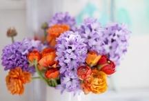 Flowers | Fleurs / Beautiful flowers
